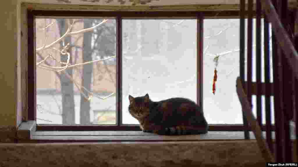 Кішка на підвіконні чужинців не боїться