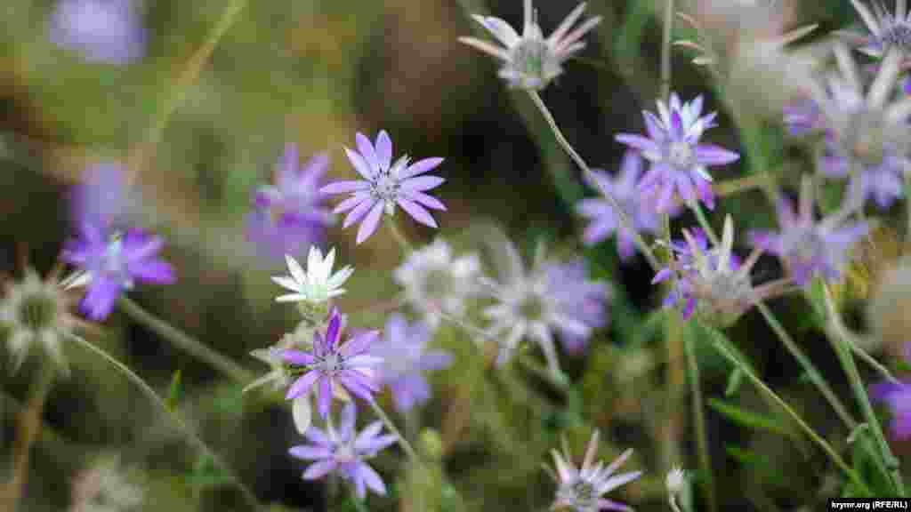 І інші польові квіти неподалік