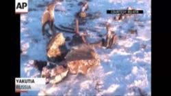 У Росії відкопали скелет мамонта, у якому була рідка кров