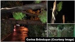Furtuna din Cluj a doborât copaci și a inundat străzile.