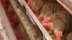 Традиционный завтрак американцев - яичница - под угрозой