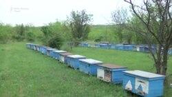 Когда умирают пчелы