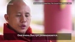 Монах из Бирмы сравнивает мусульман с рыбами