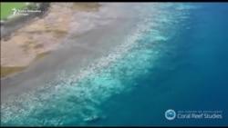 """Veliki koraljni greben trpi """"najgore zabilježeno izbjeljivanje"""""""