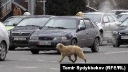 В Кыргызстане насчитывается около 1 млн транспортных средств.