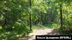 Лесной массив. Хабаровский край.