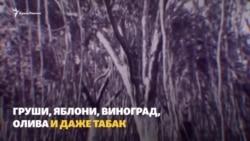 Вода в Крыму: каким был Крым до и после строительства Северо-Крымского канала (видео)