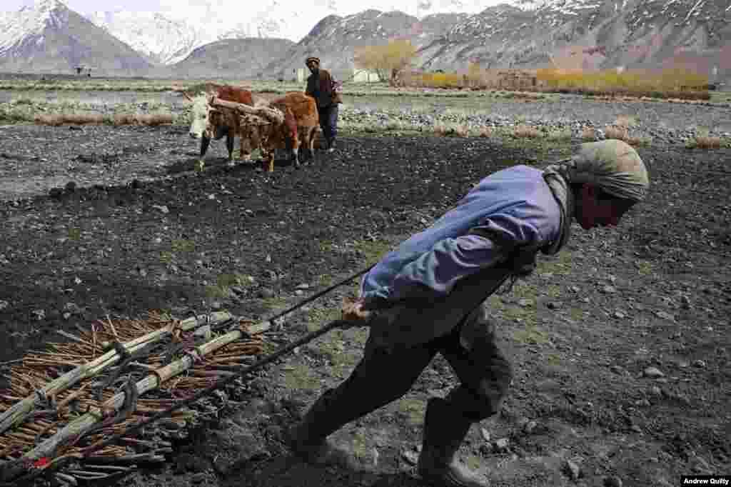 Отец и сын пашут поле в деревне Салхад Бреухил в Ваханском коридоре