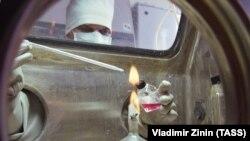 """Работа лаборатории опасных вирусных инфекций НИИ Молекулярной биологии """"Вектор в Новосибирске (архивное фото)"""