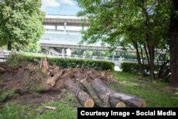 Срубленные деревья в Лужниках