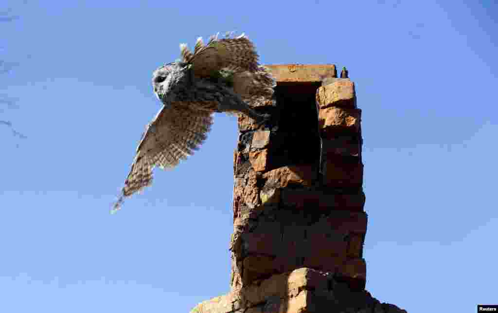 A tawny owl leaves a chimney in the village of Kazhushki, Belarus. The abandoned zone spans the border area of Ukraine, Belarus, and Russia.