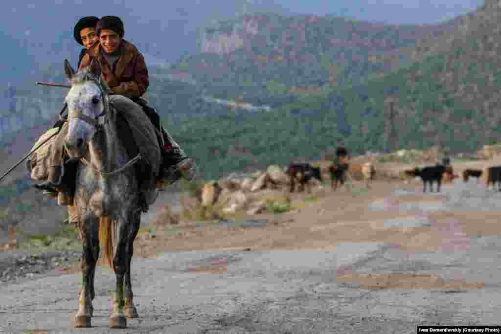 Boys on horseback followed by their fathers, who herd cows along the mountain pasture.
