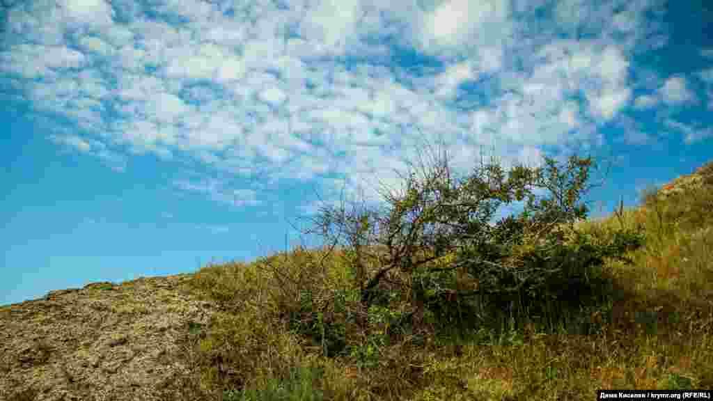 Природа степного Крыма