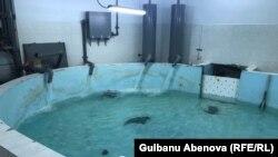 Отдельная чаша для адаптации вновь прибывших акул в столичном океанариуме. Астана, июнь 2018 года.