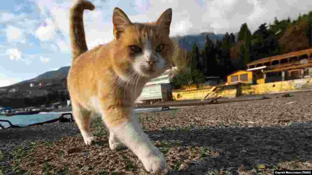 А прогуливающихся по набережной туристов заменили коты