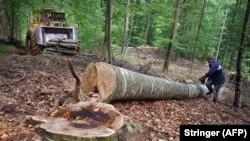 Najveća sječa šume dogodila se pred lokalne izbore 2020. godine (arhivska fotografija)