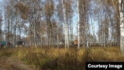 В этом лесу многодетным предложили строить дома