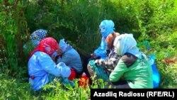 İmişli, Qaralar kəndi, 2018-ci il