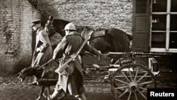 Эпизод Первой мировой: собака тянет колесницу с пулемётом. Бельгийские войска на севере Франции. (Без даты)