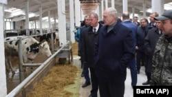 Аляксандар Лукашэнка з чыноўнікамі наведвае фэрму ў сакавіку 2019 году