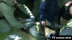 تصاویر منتشر شده از دستگیری جوهر سارنائف