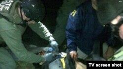 Полицейские в момент задержания Джохара Царнаева. Уотертаун, 19 апреля 2013 года.