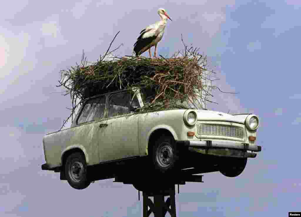 Some Trabants took on odd new careers, like this famous Trabi stork nest in the eastern German town of Neuruppin...