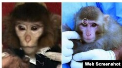 In January, Iran announced it had successfully brought a live monkey back to Earth from orbit, but that was disputed when a different monkey was presented to the media after the landing.