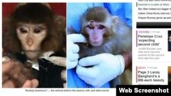 A thua e ka falsifikuar Irani fluturimin e majmunit në gjithësi?