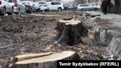 Вырубка деревьев в Бишкеке.
