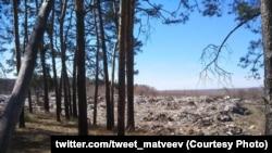 Свалка мусора в лесу (иллюстративное фото)