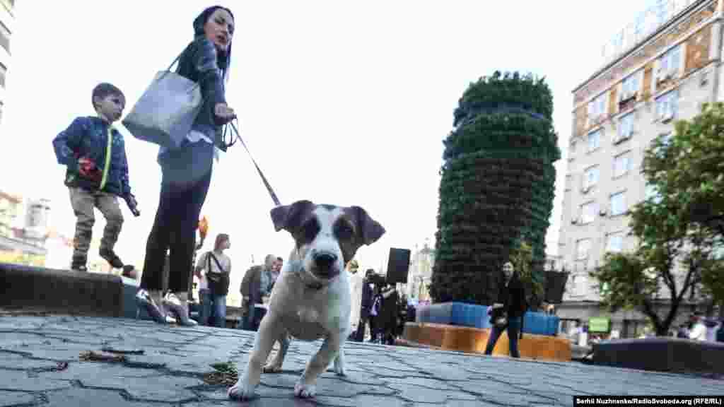 Собаки «за»сучасне мистецтво