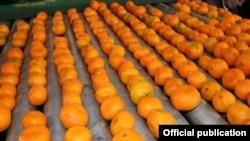 Mandarine, ilustrativna fotografija