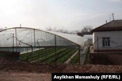 Частное тепличное хозяйство в селе Ынтымак Сарыагашского района Южно-Казахстанской области. 11 февраля 2015 года.