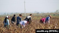 Uzbekistan gave up using minors for cotton-picking in 2015 under international pressure that included boycott campaigns. (file photo)