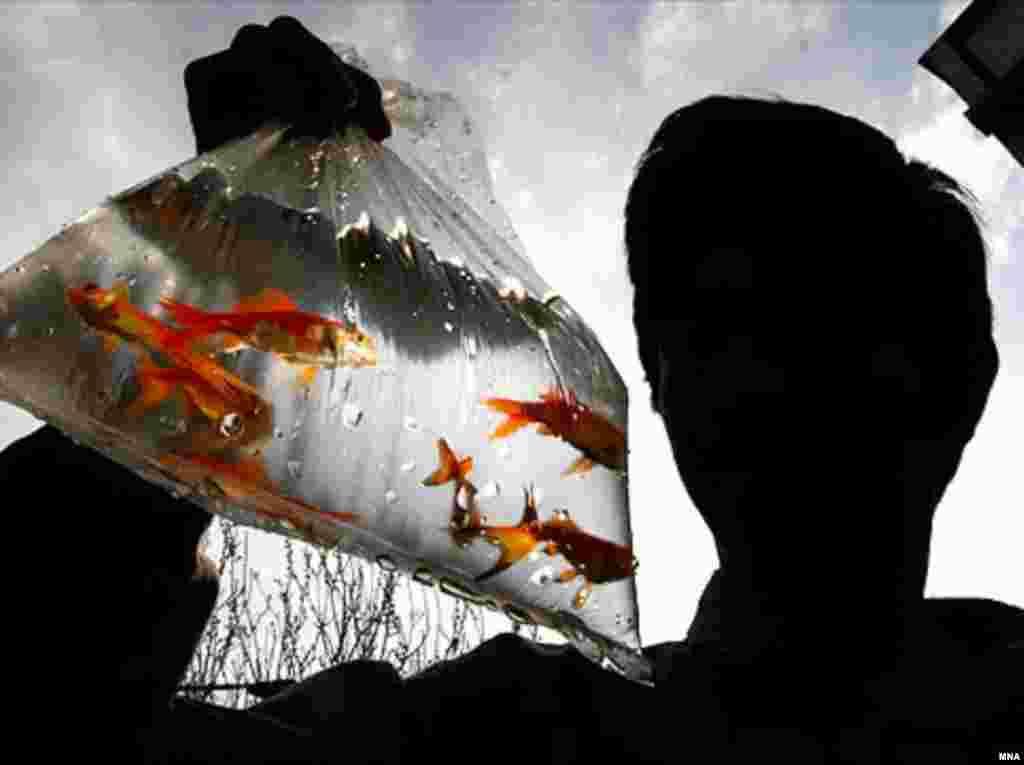 ماهی ها باید مسافت حوض فروشنده تا تنگ خریدار را در این پاکت های پلاستیکی طی کنند!