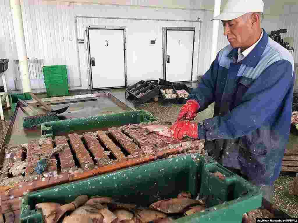 Рыбный завод в Арале, Кызылординская область.