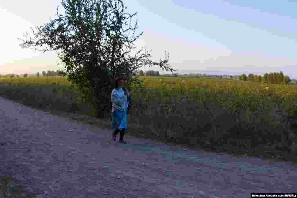 С одного гектара крестьяне получают примерно тонну или полторы тонны хлопка. С августа по ноябрь хлопок собирают несколько раз.