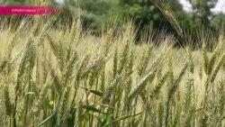 Фермеры Одессы грозят прекратить экспорт зерна