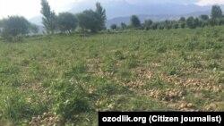 Фарма погодена од бурата во Узбекистан