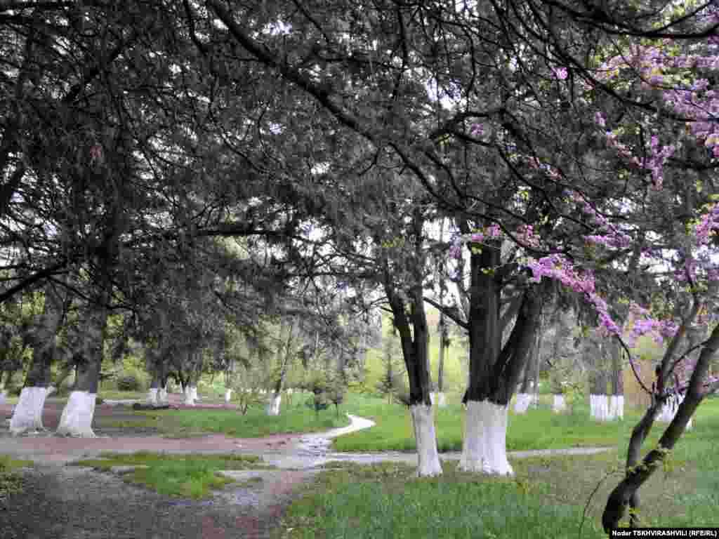 დიღმის ტყე-პარკის ტერიტორიაზე არაერთი მცენარის უნიკალური ჯიშია აღრიცხული.