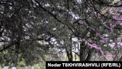 По решению мэрии, парки Тбилиси будут переданы в аренду на 49 лет частным инвесторам