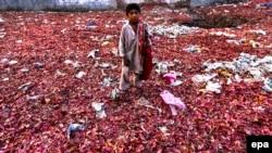 Un copil din Pakistan caută ceapă printre deșeurile alimentare aruncate de un supermarket