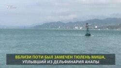 Миша в территориальных водах Грузии