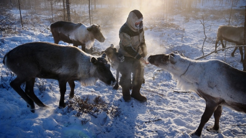 At Risk: Russia's Indigenous Peoples Sound Alarm On Loss Of Arctic, Traditional Way Of Life