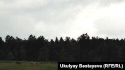 Германиядағы фермалардың бірі. Көрнекі сурет