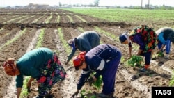 Tajik migrant workers in Russia (file photo)