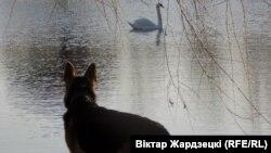 ФОТА ДНЯ: Сабак і лебедзь. Віктар Жардзецкі