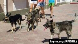 Бродячие собаки в Феодосии, апрель 2019 года