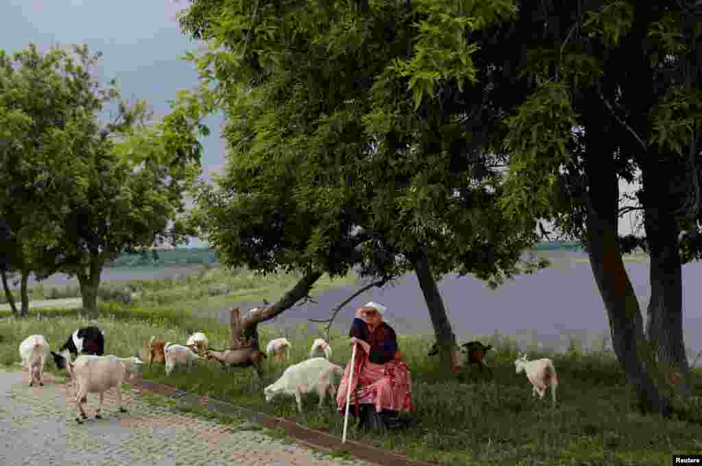 A woman sits with her goats in Sviyazhsk, Russia, on June 27. (Reuters/Darren Staples)